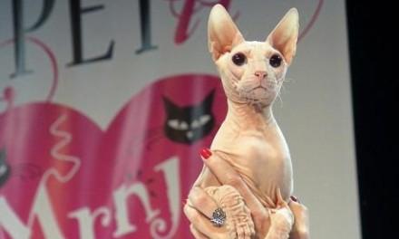 Razmažene mačke iz visokog društva u Beogradu
