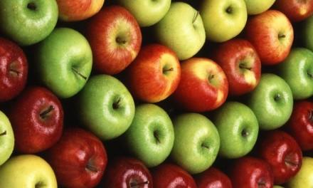 Da li biste brali jabuke za 160 eura dnevno?