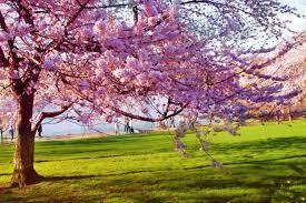 proljece1