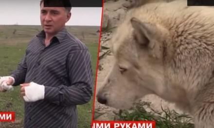RUS GOLIM RUKAMA SAVLADAO VUKA, a sada ga čuva u dvorištu svoje kuće! (VIDEO)