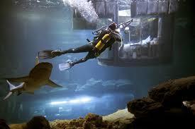 Akvarijum u Parizu nudi spavanje s ajkulama