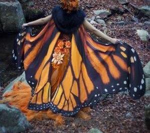 Pogledajte čaroliju – leptira!