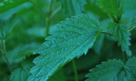 Ova biljka rešava probleme od glave do pete