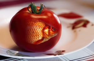 paradajzriba