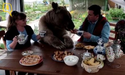 Stepan je medvjed koji živi sa ljudima i voli gledati TV