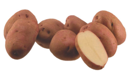 Povoljno prodajem domaći rogatički krompir