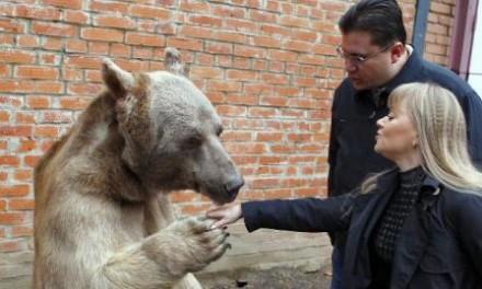 Ruska porodica ruča zajedno sa ogromnim medvjedom