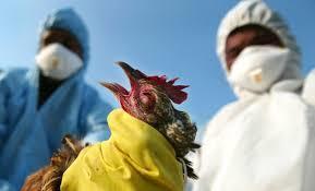 Ptičji grip na granici Hrvatske i Srbije