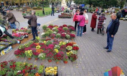 Sajam cvijeća u Subotici