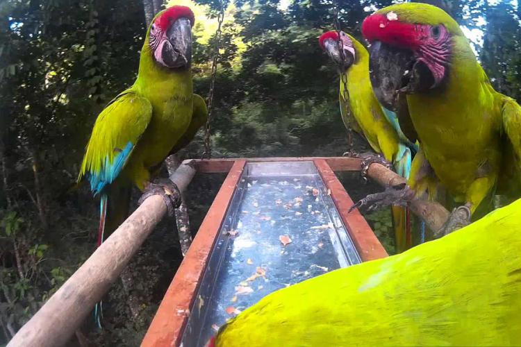 Hranite papagaje, surfajte i zaradite 2.000 evra