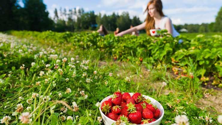 JAVNI POZIV za korištenje sredstava za unapređenje polјoprivredne proizvodnje