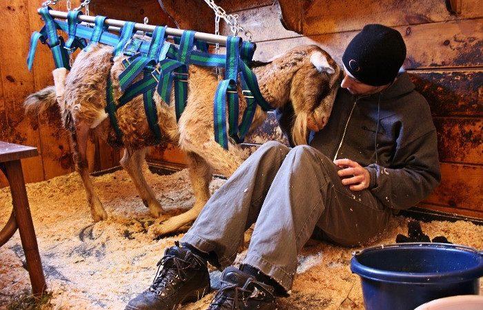 Poziv za program volontiranja u radu na Mendona farmama u SAD-u