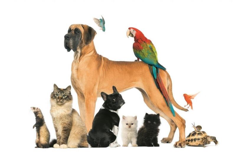 Novo – veterinarska apoteka   ZOOMA