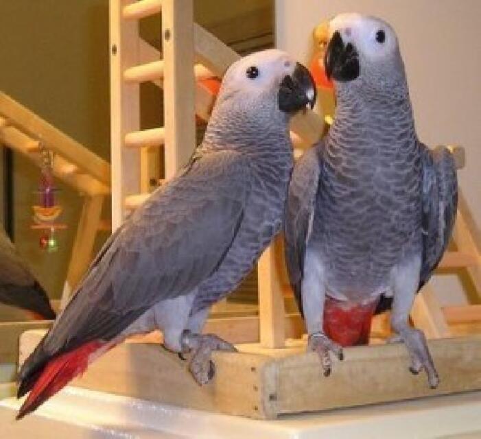 Papagaji iz zoološkog vrta moraju na odvikavanje! Pogledajte zašto..